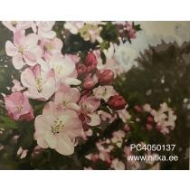 """Maalimine numbrite järgi """"Lilled"""", 40x50"""